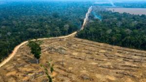 Feilschen um den Regenwald