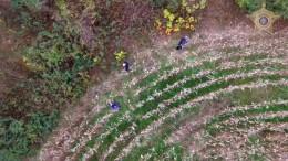 Polizei findet vermisste Frau mit Drohne