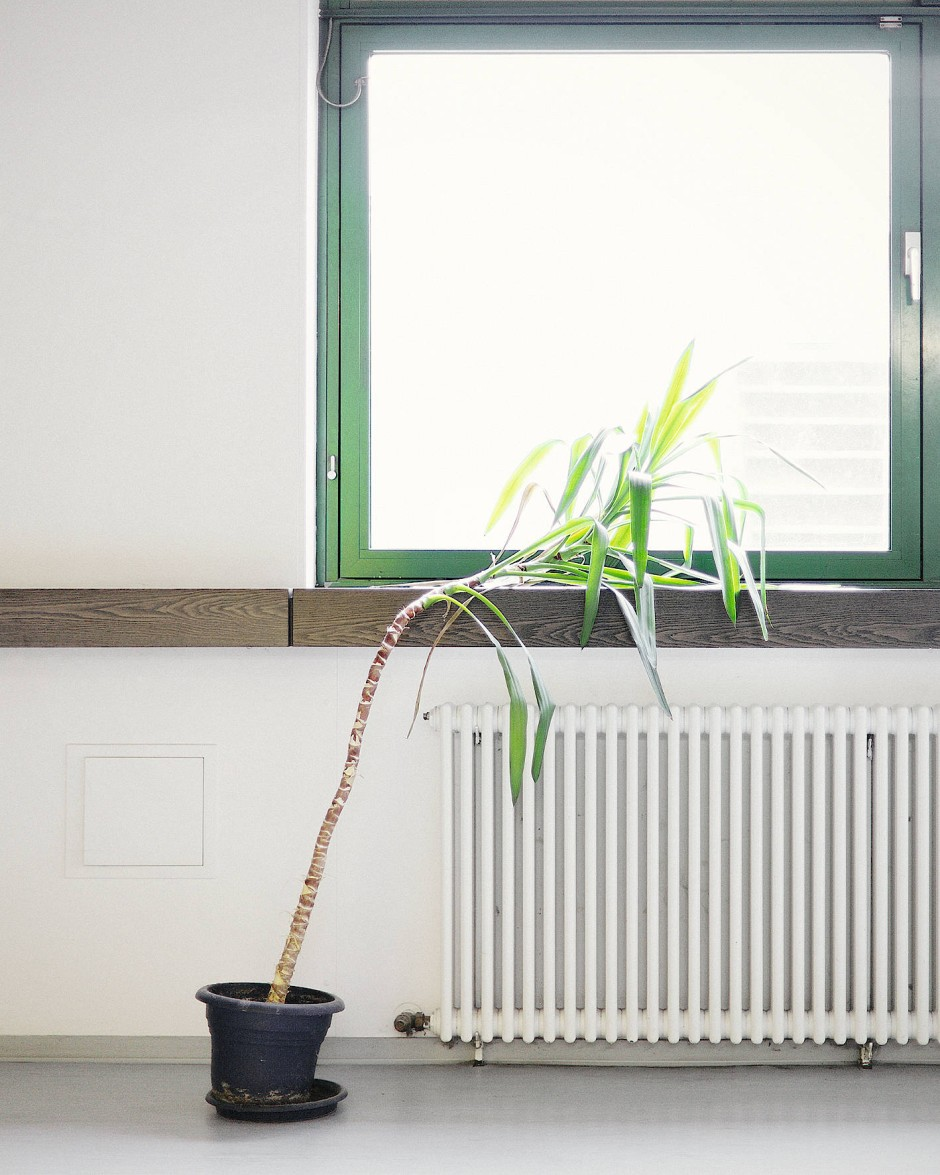 Büropflanze Ute leidet unter Tagträumen.