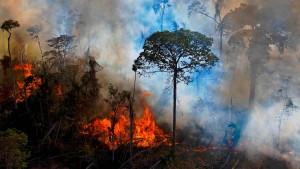 Warum Bolsonaro plötzlich Umweltschützer sein will