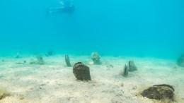 Wie die größte Mittelmeer-Muschel gerettet werden soll