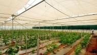 Ein Forschungszentrum von Monsanto in Bangalore.
