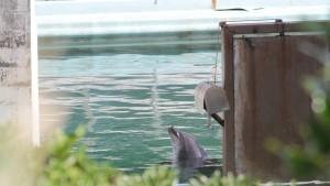 Zoobesitzer lassen illegal gefangene Tiere zurück