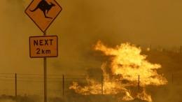Drei Milliarden Tiere Opfer von Buschbränden