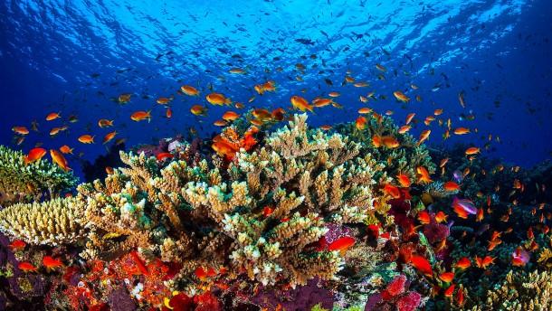 Great Barrier Reef verliert die Hälfte seiner Korallen