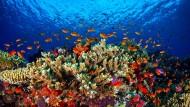 Das Great Barrier Reef in Australien gehört zu den bedrohten Lebensräumen.