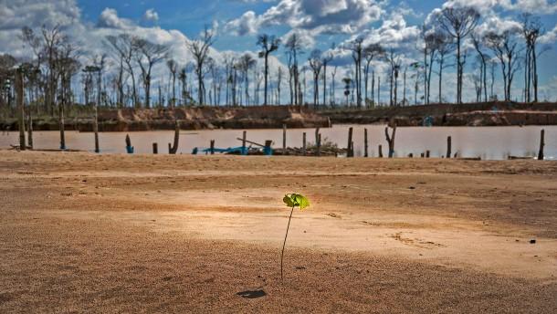 Eine Billion Bäume und hundert Fragen