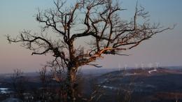 EEA fordert mehr Anstrengungen gegen Klimawandel