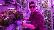 Die Hightech-Gemüsekiste