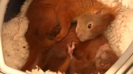 Eichhörnchen in Not