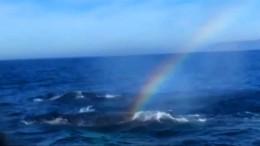 Buckelwale pusten Regenbogen