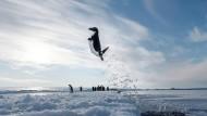 """Hier taucht ein Adélie-Pinguin blitzschnell auf und schießt aus dem Wasser – die beste Art, einem am Eisrand lauernden Seeleoparden zu entgehen. Aber eine wesentlich größere Gefahr ist die Erwärmung im Ozean und an Land. Durch frühe Schneeschmelzen oder noch nie dagewesenen Regen wird sich das auf die Nistplätze auswirken und die Verfügbarkeit von Krill und Fisch beeinflussen. Die Natur-Doku """"Unser Planet"""" widmet sich auch diesem Thema, sie erscheint als Buch (UNSER PLANET, 39,90 Euro, DuMont Reiseverlag) und bei Netflix an diesem Freitag."""