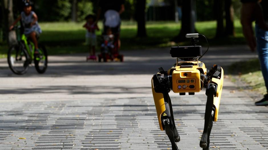 Roboterhund hilft aus