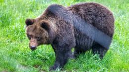 Mann stirbt nach Bärenattacke