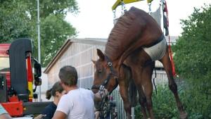 Feuerwehr rettet Pferd mit Kran