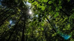 Warum ist der Wald so wertvoll?