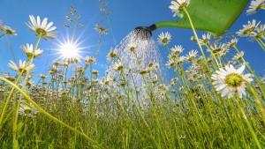 Kühler Kopf beim Blumengießen