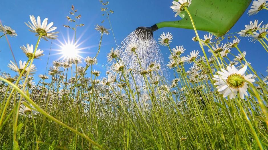 Je stärker die Hitze, desto mehr wird gegossen – doch das ist nicht immer das Beste für die Pflanzen.
