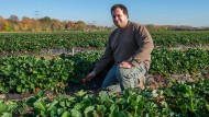 Bauer Stefan Manke erntet auf seinem Feld Erdbeeren im November.