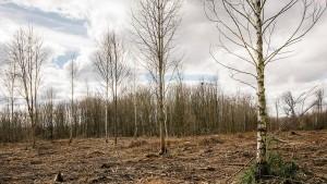 Wenn der Wald stirbt