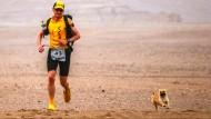 Streuner folgt Ultraläufer durch die Wüste