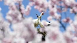 Glücks- und Frühlingsgefühle