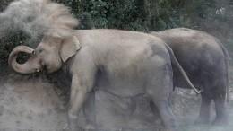 Hilfe für kranke Elefanten