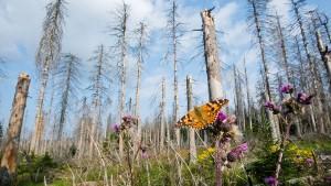 Bis zu 800 Millionen Euro für den deutschen Wald