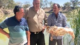 Bis zu eine Million Fische in Ostaustralien verendet
