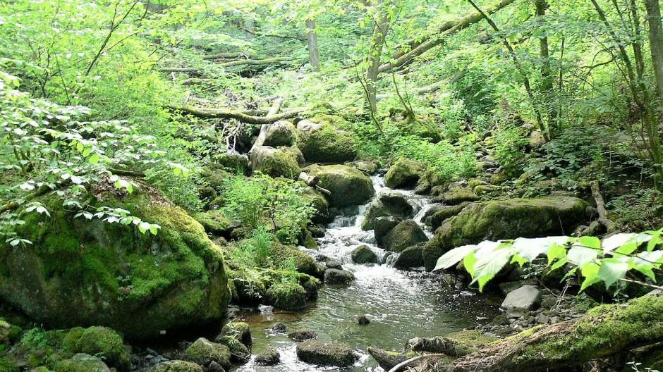 Über Felsen und umgestürzte Bäume sucht sich der wilde Elsbach seinen Weg.