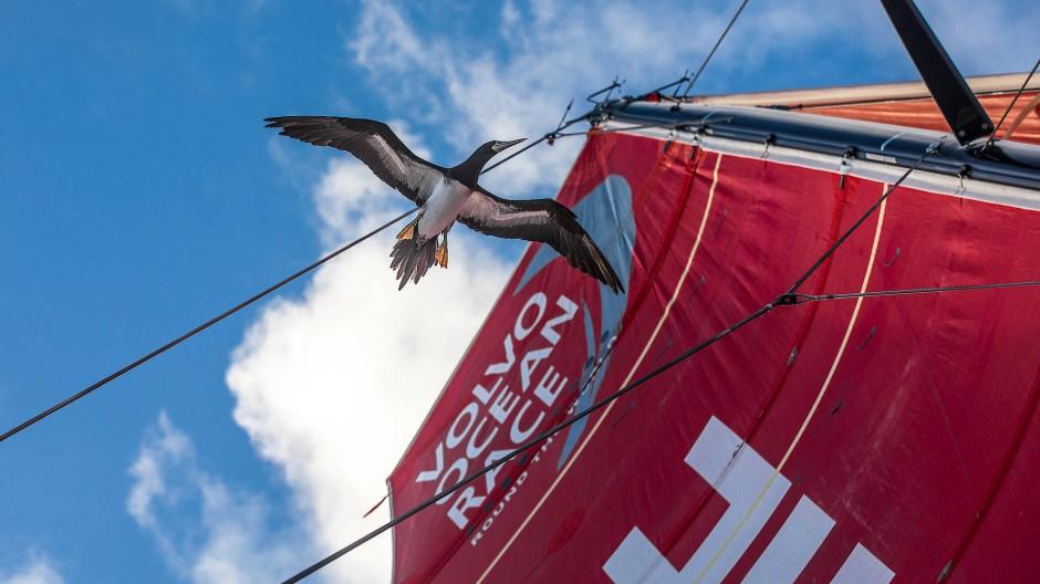 Seltener Gast: Ein Meeresvogel erkundet das Boot der Mapfre-Crew.