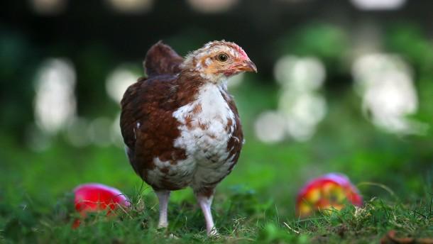 Von Hühnern und Hipstern