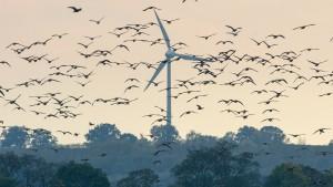 Vergebliche Mühen für die Windenergie