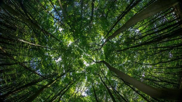 Je nach Blick auf den Wald