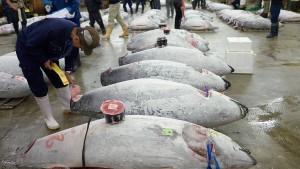 Wie Verbrecher beim Fischfang mitmischen