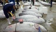 Auf dem Tsukiji-Fischmarkt in Tokio werden Thunfische vor der Auktion begutachtet.
