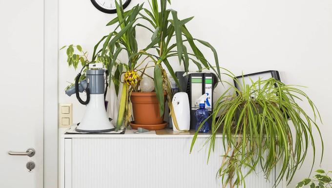 Büropflanzen reduzieren den Lärmpegel, filtern Staub aus der Luft und wirken als natürlicher Luftbefeuchter.