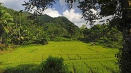 Reisfelder und Natur, soweit das Auge reicht: Der Norden von Sri Lanka ist touristisch kaum erschlossen.