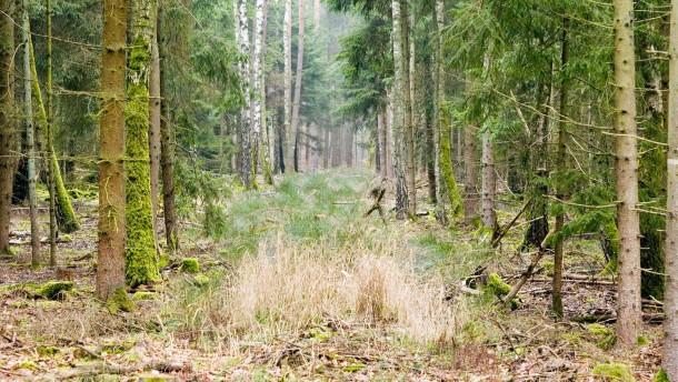 Ein Wald wird geerntet