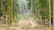 Wo gerodet wird, fallen Bäume: ein Rückweg der Waldarbeiter im Heusenstammer Forst.