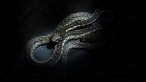 Die Schlangenflüsterin von Eswatini