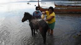 Vulkan-Anwohner retten ihre Pferde