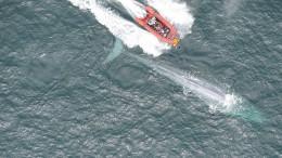 So schlägt das Herz des Blauwals