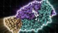 Die Medizin nutzt spezielle Antikörper (grün und lila), die eine Bremse im Immunsystem ausschalten sollen (hier gelborange). Dadurch soll es imstande sein, Krebszellen zu bekämpfen.