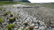 Kalifornien leidet unter Trockenheit - bringt El Niño mehr Regen?