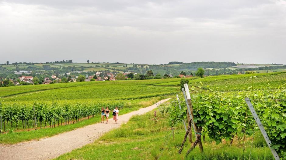 Gibt seinen Namen auch für einen elsässischen Wein her: Der Schweigener Sonnenberg am vergangenen Sonntag