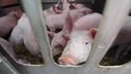 NRW-Agrarministerin wird Tierquälerei vorgeworfen