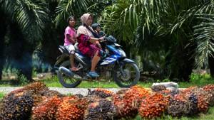 Südostasien schlägt zurück im Palmölstreit mit der EU