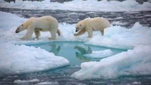 Meereis in der Arktis auf negativem Rekordstand