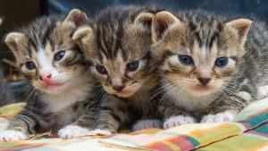 Grüne wollen Haustiere besser schützen